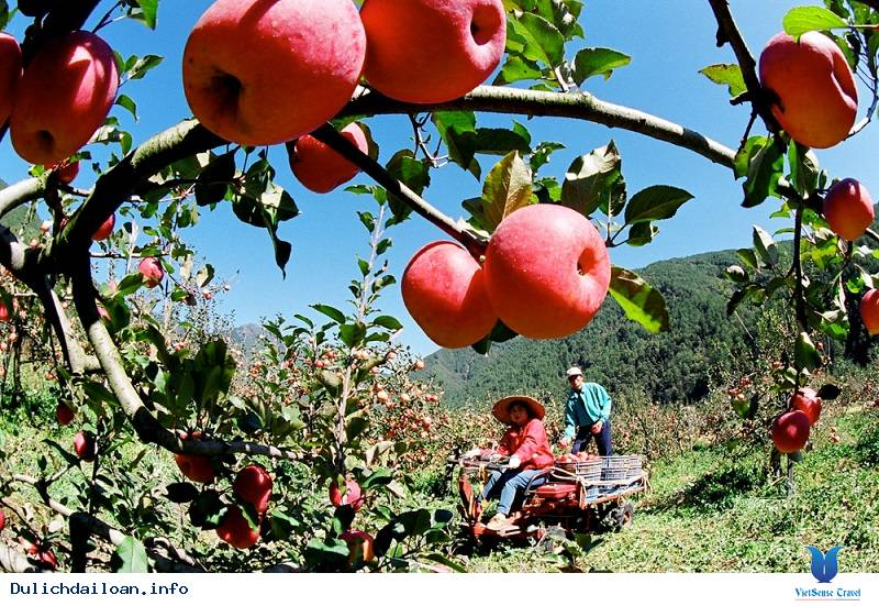 13 loại trái cây bạn có thể tới thu hoạch khi du lịch Đài Loan